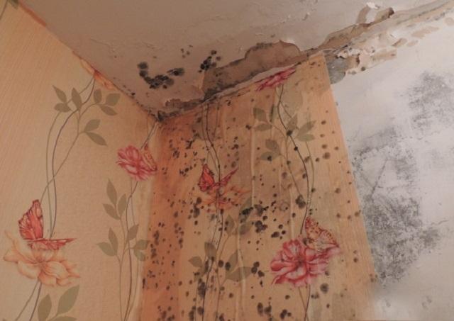 Обои в ванной комнате можно клеить исключительно тогда, когда в ней обустроена очень эффективная вентиляция. В противном случае плесень под обоями практически гарантирована со временем.