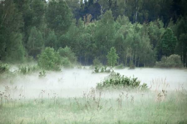 """По """"концентрации"""" тумана можно определить, где вода ближе"""