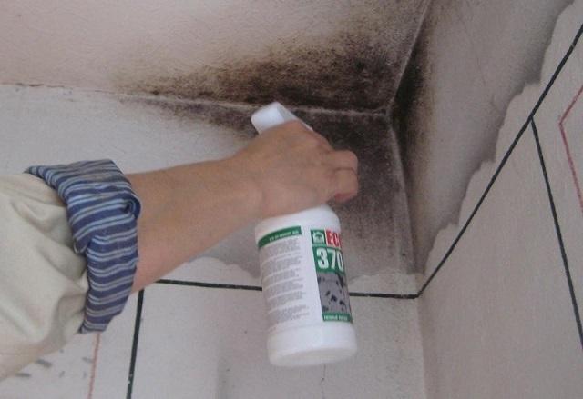 Обработка участка пораженной плесенью стены дезинфицирующим средством.